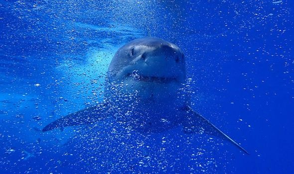 Millions of sharks will have to die for Corona's vaccine