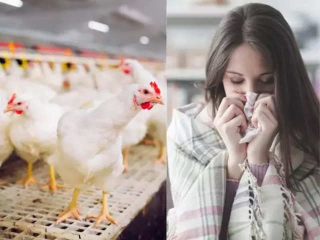 Bird flu caused chaos in these states of India- ख़बर लाज़मी